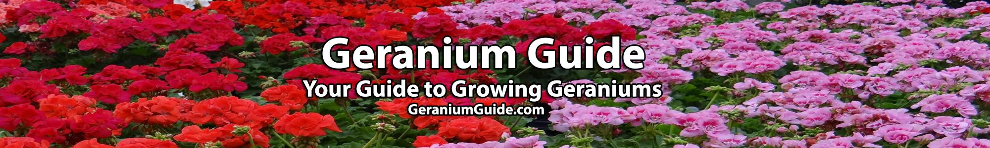 Geranium Guide