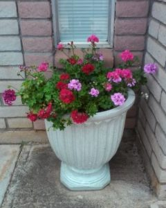 A Guide On The Best Pots For Geraniums Geranium Guide